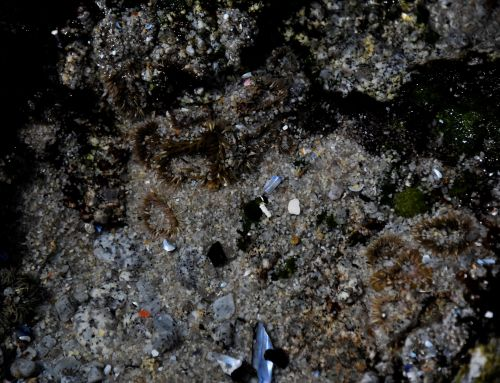 Flat Lay Tidepool Background