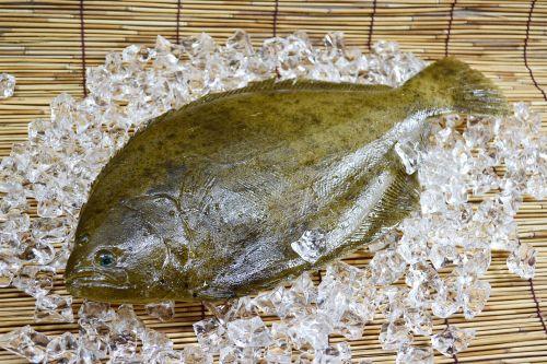 Flatfish (left‐eyed Flounder)
