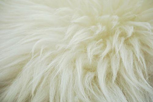 fleece hide wool