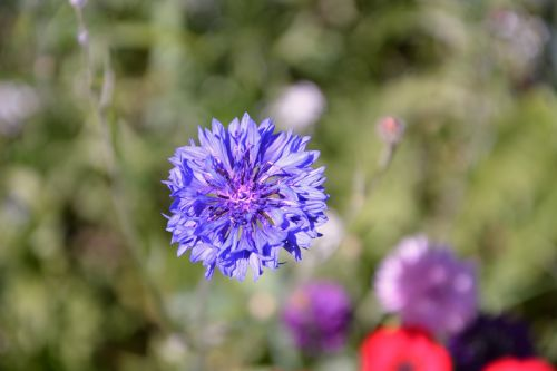 Flower Blueberry