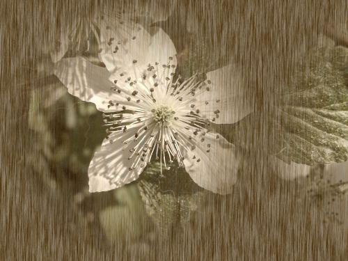 Mulberry Stylized Flower # 1