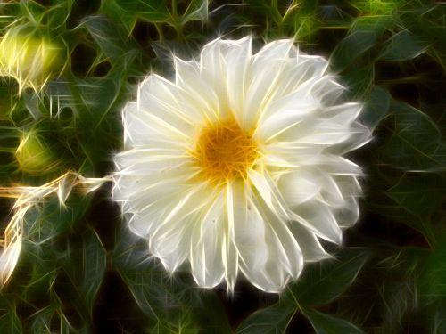 Stylized Flower # 11