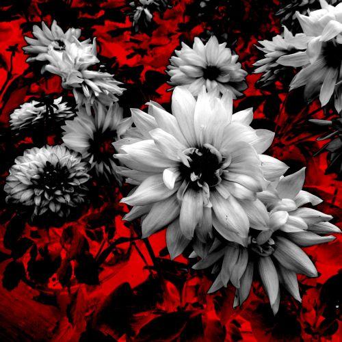 Stylized Flower # 4
