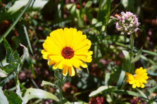 Flower Variety Gerbera