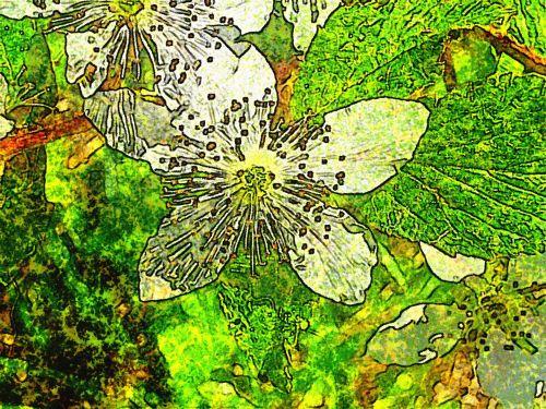 Mulberry Stylized Flowers # 2