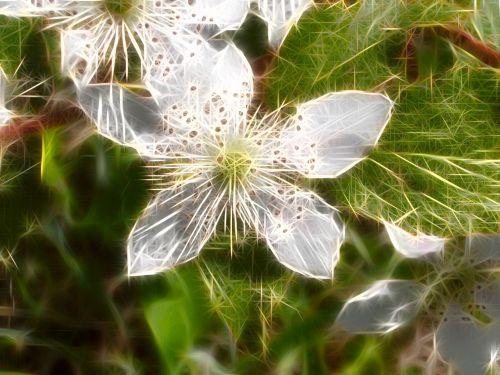 Stylized Flowers Mulberry # 3
