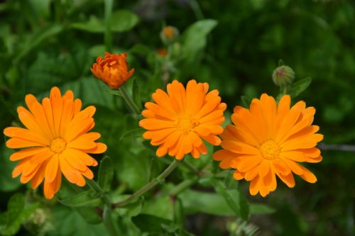 Flowers, Planter, Orange
