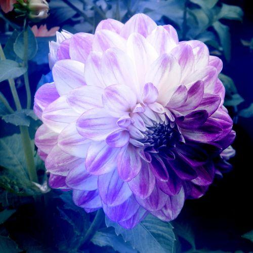 Stylized Flowers # 14