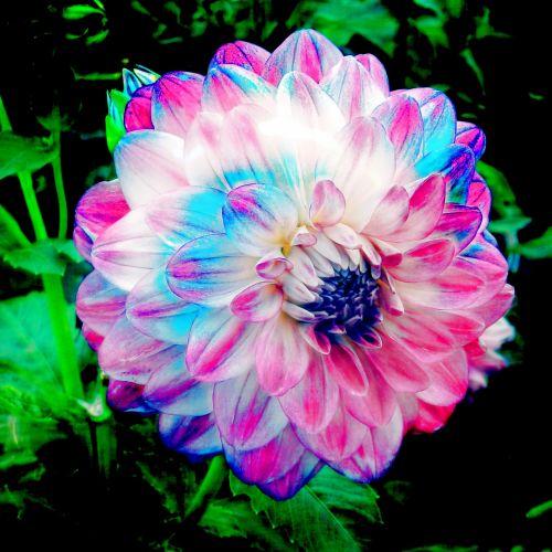 Stylized Flowers # 15