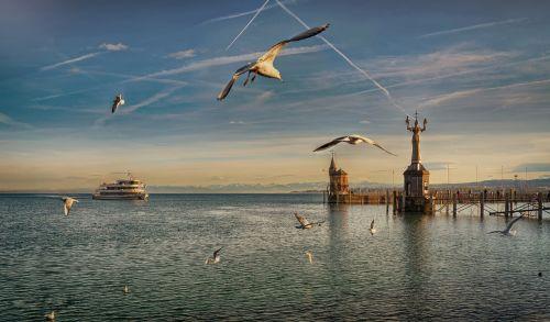 flight port bird