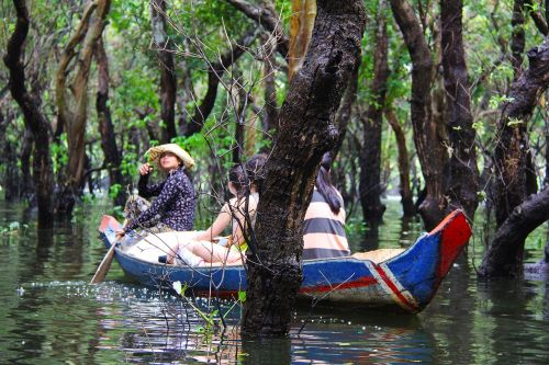 floating forest floating forest