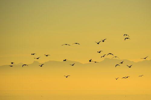 flock birds seagull