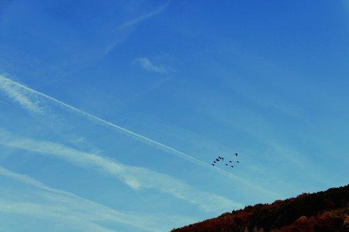 flock of birds  birds  landscape
