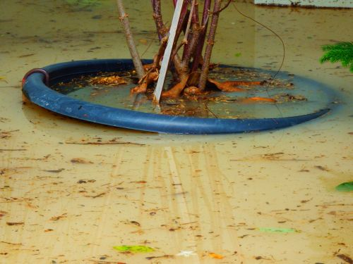 Flooding Garden