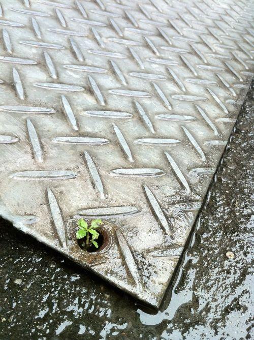 flooring strong 韌 life