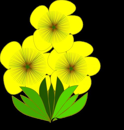 flor flor amarela spring