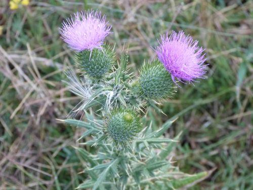 flor field naturaleza