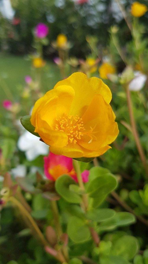 flor  flower  natureza