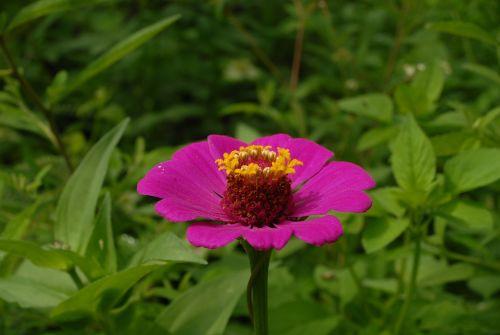 flor san miguel nature garden
