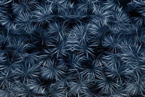 flora entwine fractals