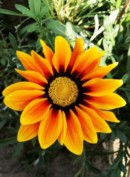 flora flower garden
