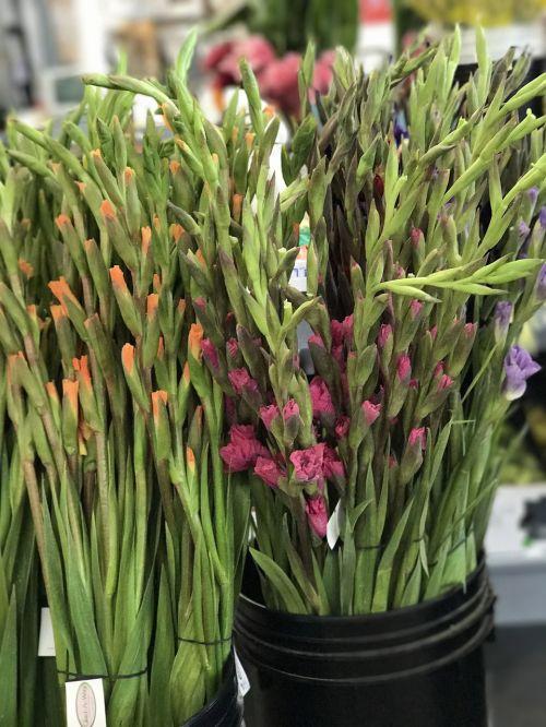 flora flower cluster