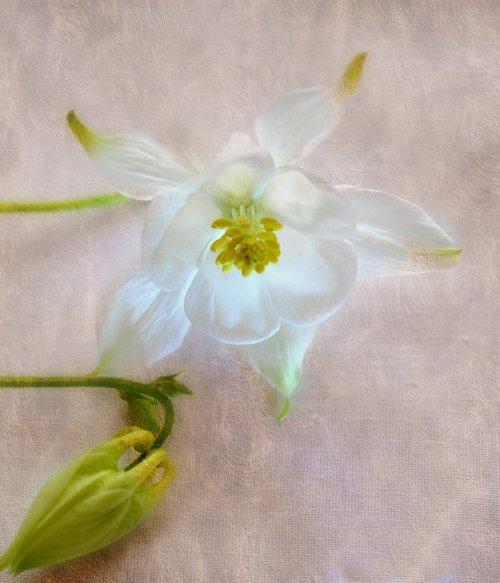 flora  flower  pretty