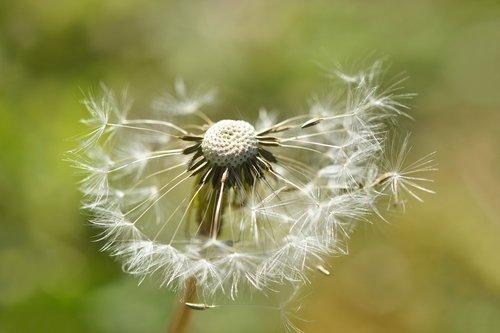 flora  flower  fulfillment