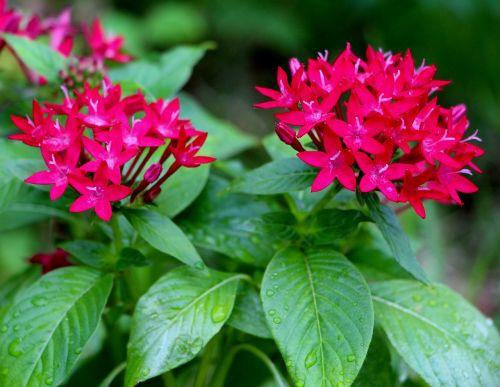 flora,subtilus,gamta,sodas,žalias,romantiškas,žiedlapis,trapi,pavasaris,gėlės