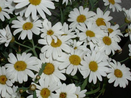 floral margin renon white