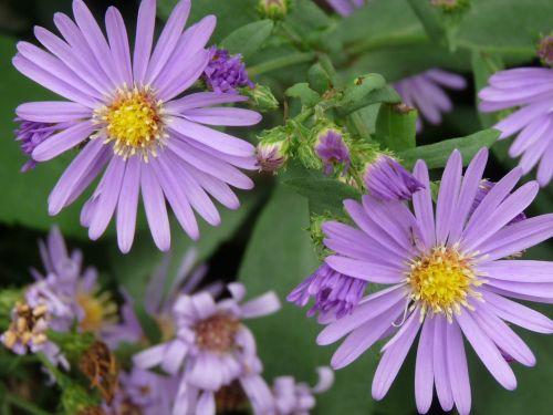 floral plants natural