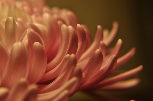 floral petals flowing