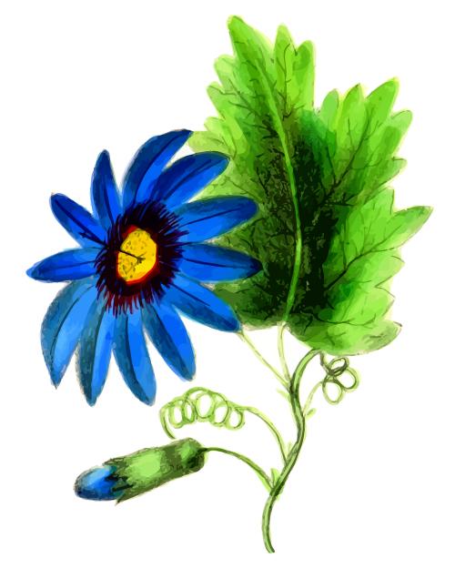 floral flower leaf