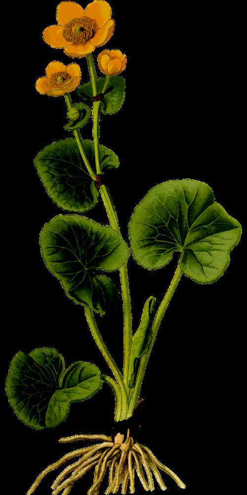 floral flower herbaceous