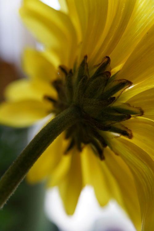 floral behind hidden