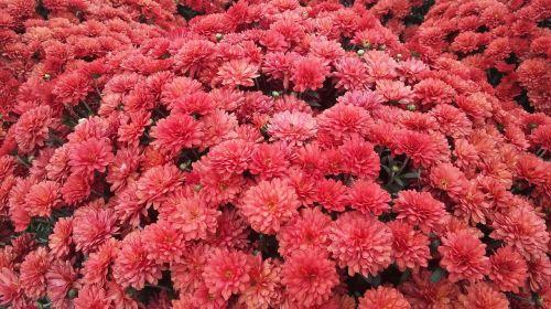 floral garden fall