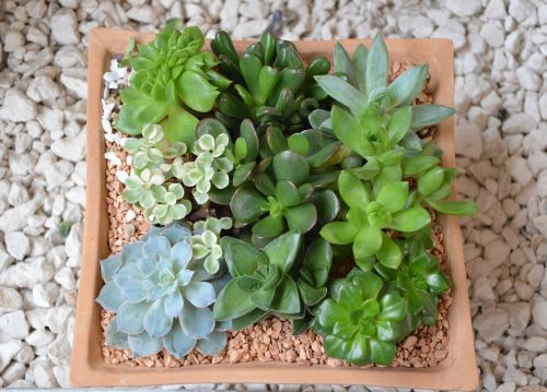 floral composition green plants offer giveaway events