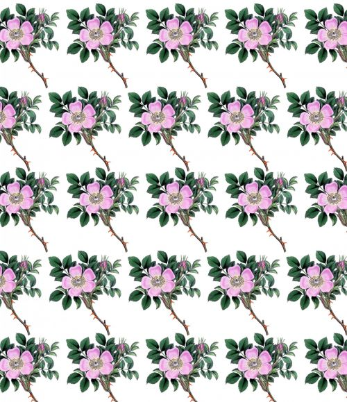 Floral Dog Rose Background