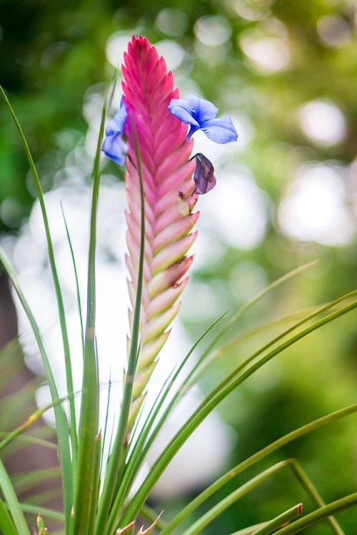 flore  flower  nature
