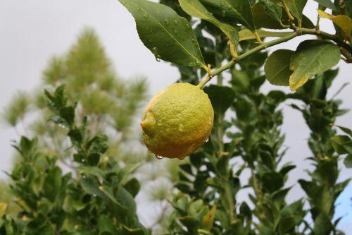 Florencija,Arizona,vienuolynas,citrina