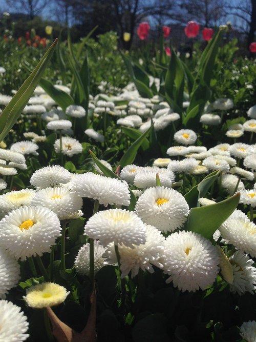 floriade  canberra  act