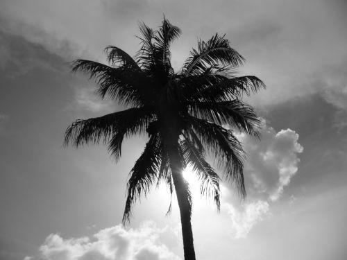 florida palm naples