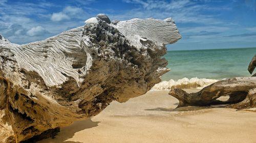 florida,beach,sea,gulf,ocean,coast,florida beach,tropical,seashore,wood,petrified wood,outdoor,sand