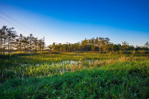 florida swamp everglades
