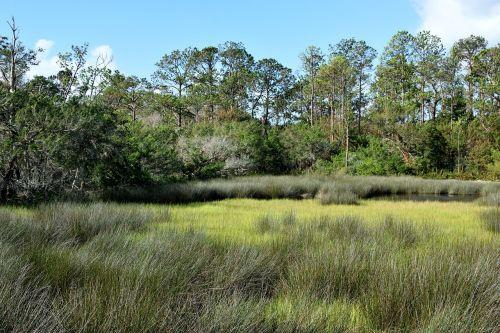 florida marshland swamp grass
