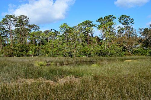 florida marshland wetland swamp