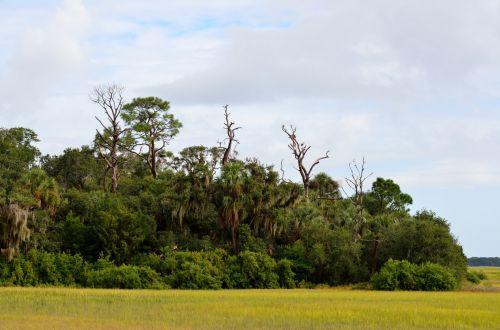 Florida Marshland