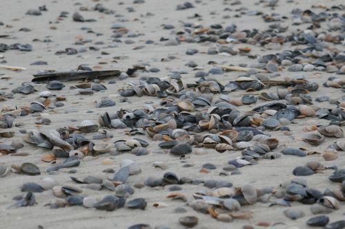 flotsam mussels beach