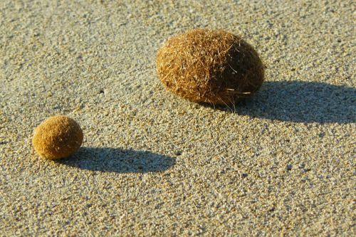 flotsam sea grass balls