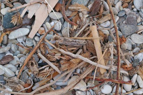 flotsam wood drift wood